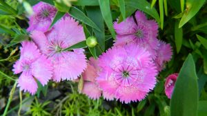Spiritual Psychic Reading Pink Flower picture by Bill Weber