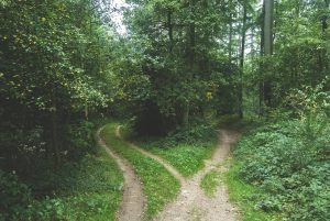 path to love in woods around trees, Love Psychic Cynthia Becker